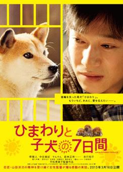 第7日的奇蹟(7 Days of Himawari & Her Puppies) poster