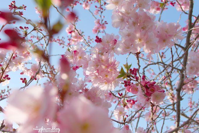http://i402.photobucket.com/albums/pp103/Sushiina/cityglam/blossom5.jpg