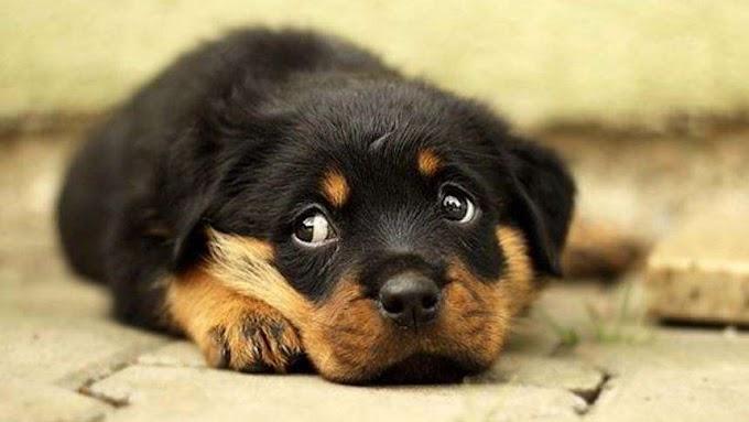 La mirada de los perros CIENTÍFICOS LA EXPLICAN