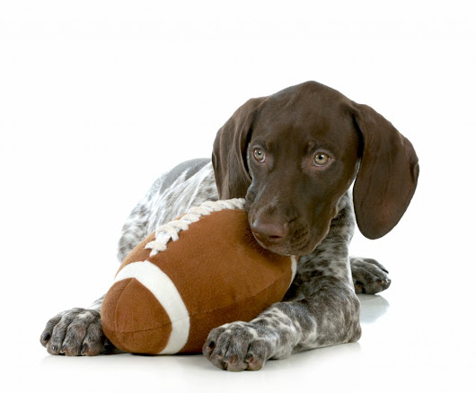 The Big Game Can Spell Big Trouble for Pets