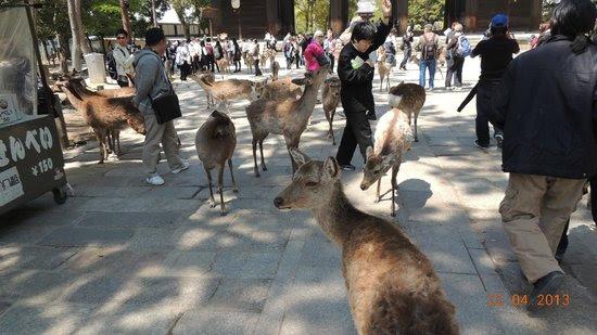 Photos of Nara Park, Nara