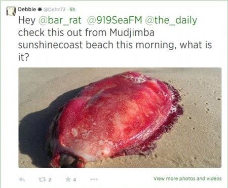 terdampar di pesisir pantai di Pantai Mudjimba Mahluk Merah Misterius Terdampar di Pantai Australia