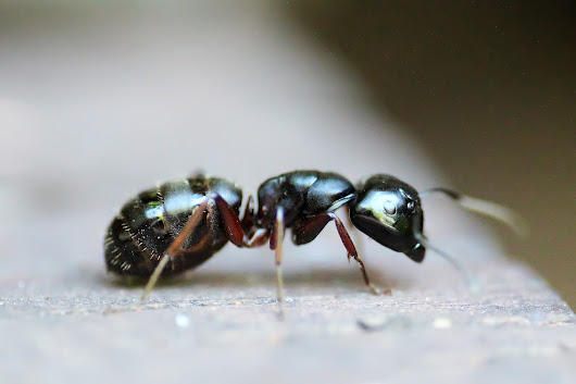 Dealing With Ants In New England | Pest & Termite Control Experts | Pest Assassins (877)554-8335