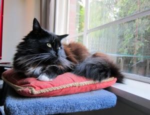 Royal-Cushion