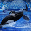 SeaWorld and Ex- CEO Fined $5 Million for 'Blackfish' Fallout | Orlando Airport Transportation Blog