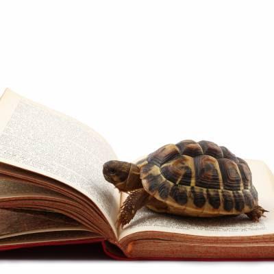 La lettura lenta, ecco 6 ragioni perché è importante