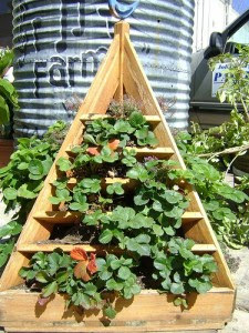 How to Build a Strawberry Planter