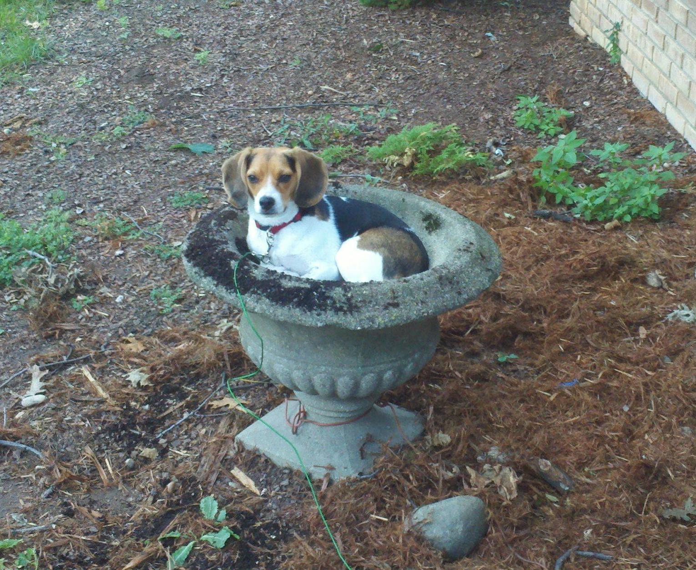 cachorro-pote-vaso