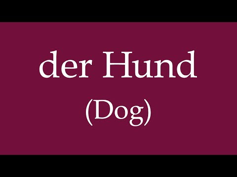 "How to Say ""Dog"" and Train Your Dog in German?"