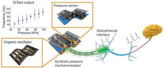 Pele artificial ativa diretamente células cerebrais