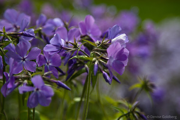 a splash of purple, flowers
