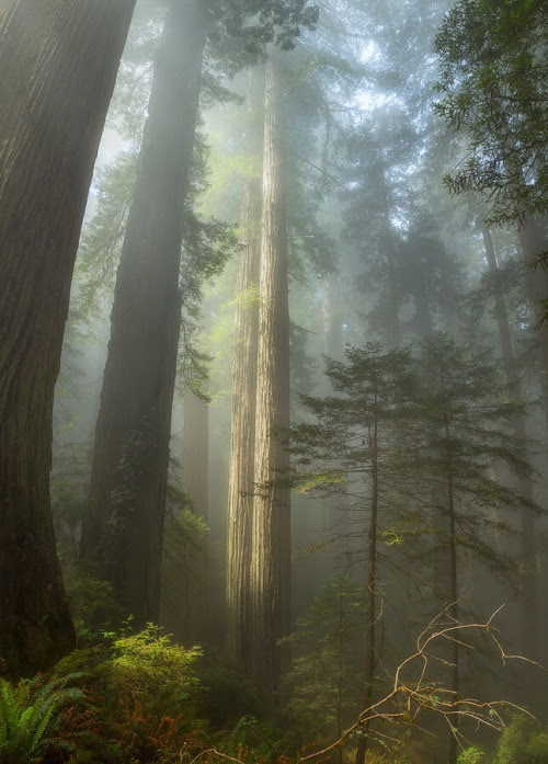 Redwood National Park is home to the some of the tallest trees in the world !