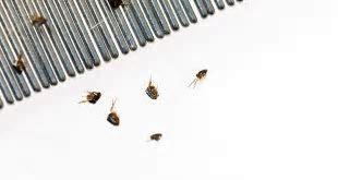 How To Get Rid Of Termites And Protect Your House   101CleaningSolutions.com