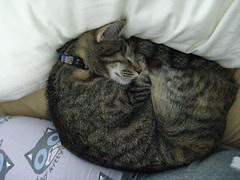 Maggie curled up against Jeni