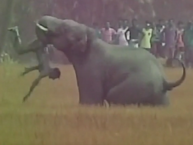 elephant-attack.png