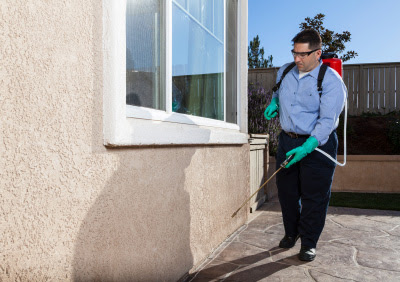 The Most Effective Ways to Protect Your Property From Unwanted Pests and Animals