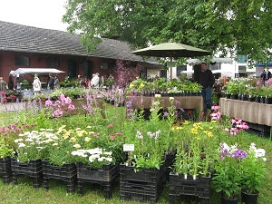 Pflanzenangebot auf einer Gartenveranstaltung