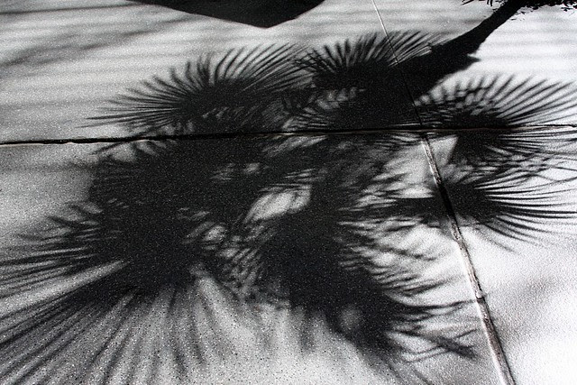 palm shadow, fremont st
