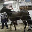 WATCH: Investigation Reveals U.S. Horses Possibly Sold For Meat In Shocking Auctions