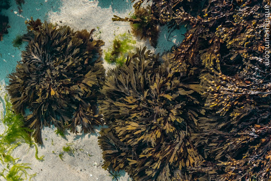Kelp, Grass and Lichens
