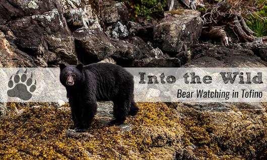 Into the Wild - Bear Watching in Tofino