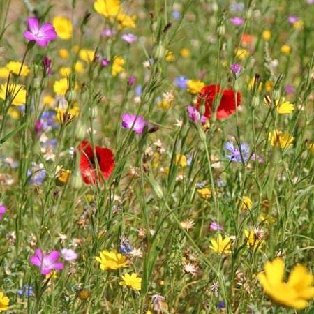 Guia De Flores Silvestres Del Campo En Primavera