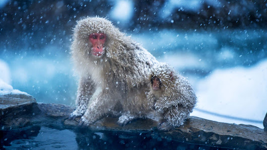 Wrap Up Warm And Meet The Snow Monkeys On This New Japanese Adventure