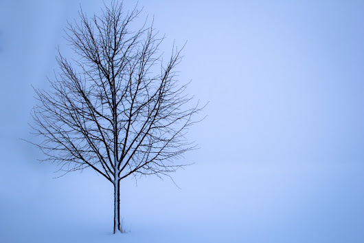 Free Images : landscape, nature, branch, snow, cold, winter, sky, fog, white, field, wind, frost, solitude, europe, ice, line, weather, frozen, season, twig, loneliness, snowdrift, norway, backgrounds, freezing, oak tree, no people, concepts and ideas, single object, atmospheric phenomenon, woody plant 5184x3456 - - 673224 - Free stock photos - PxHere
