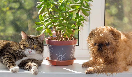 Keeping Pets Safe Around Plants