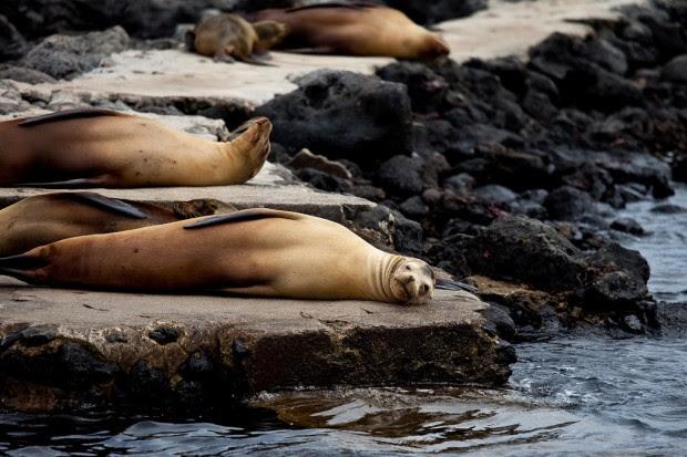 Galapagos Islands (3)