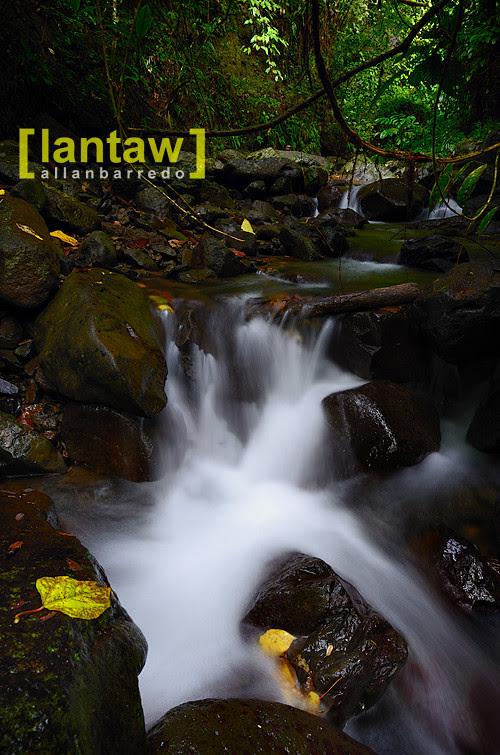 Lansones Downstream