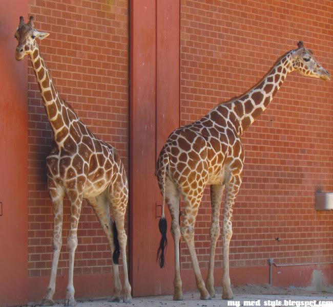 Denver Zoo Giffs