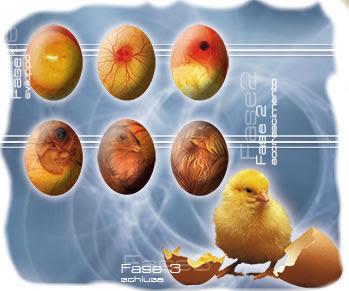 Αυγα εκκολαψης avga ekkolapsis