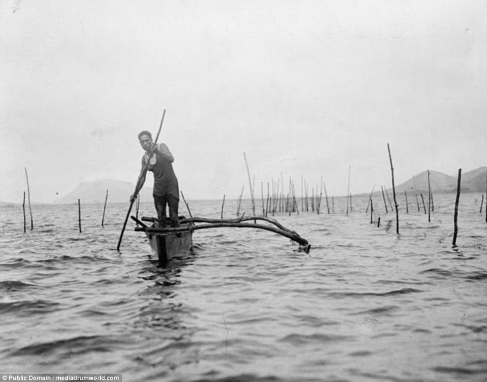 A man in a vest and shorts uses a stick as a paddle in his outrigger canoe back in 1919 in Hawaii as he makes his way through a fish trap