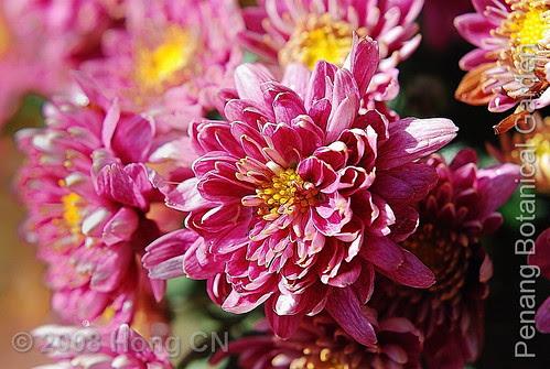 botanic_garden16