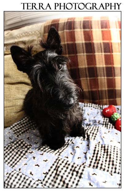 Fine art Scottie Dog photograph