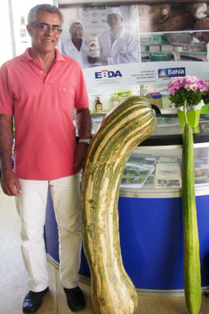 Feira expõe abóbora de 37,4Kg e 1,18m em Itabuna, na Bahia (Foto: Jamilly Nunes/ Divulgação Secom)
