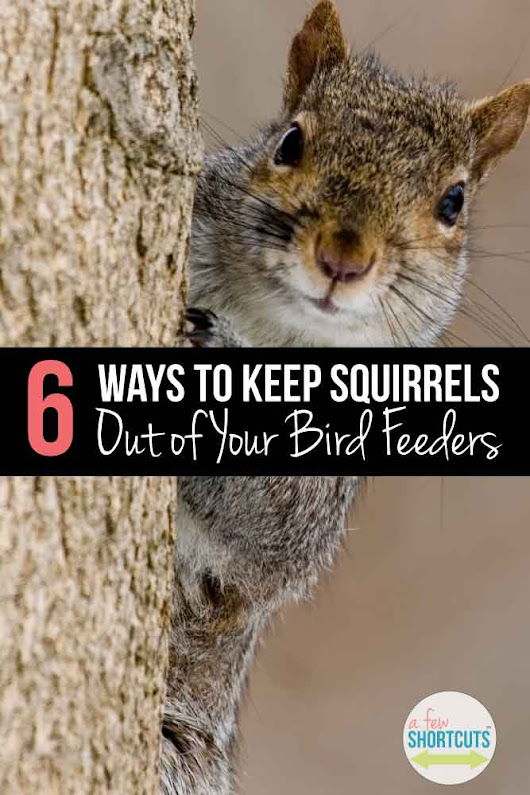 6 Ways to Keep Squirrels Out Of Your Bird Feeders