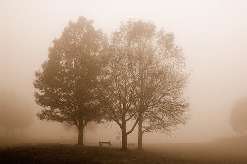 Trees, Fog and Bench