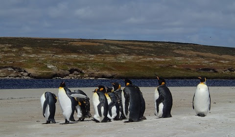 Penguins, plants, and people: Getting to the core of climate change in the Falkland Islands