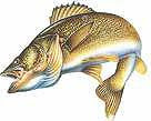 Lake Canton Walleye Rodeo