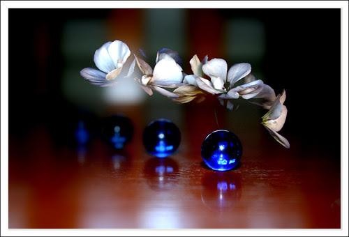 flores y canicas