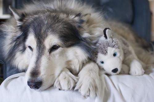 shauna + pretend puppy
