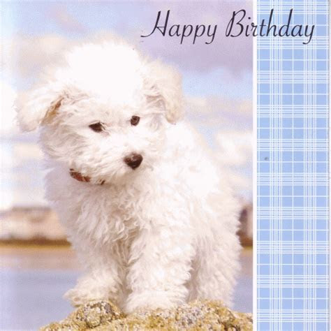 Personalised Braille White Scotty Dog Greeting Cards