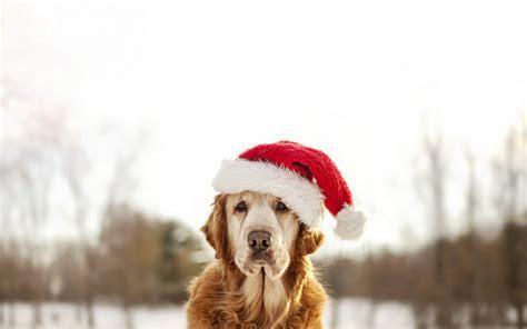 dogs winter   HD Desktop Wallpapers   4k HD