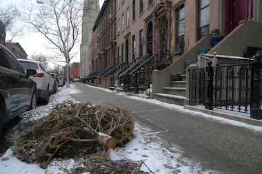 http://www.dnainfo.com/new-york/20140306/park-slope/with-easter-weeks-away-christmas-trees-still-litter-park-slope-sidewalks