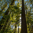 Our Forests - National Forest Foundation