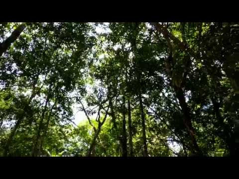 Vlog weekend - Eco rimba Kledang Sayong