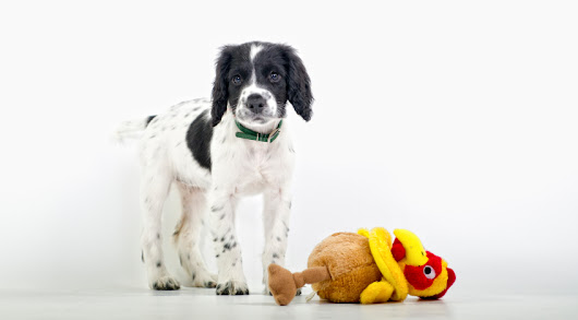 Blog : 5 Thanksgiving Safety Tips for Pets