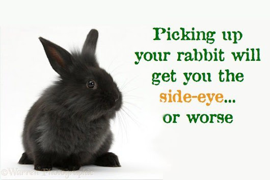 Rabbits don't like to be picked up. Here's why, and how to avoid it.